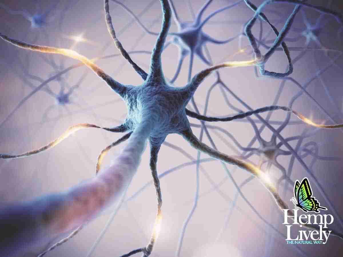 Brain cells firing