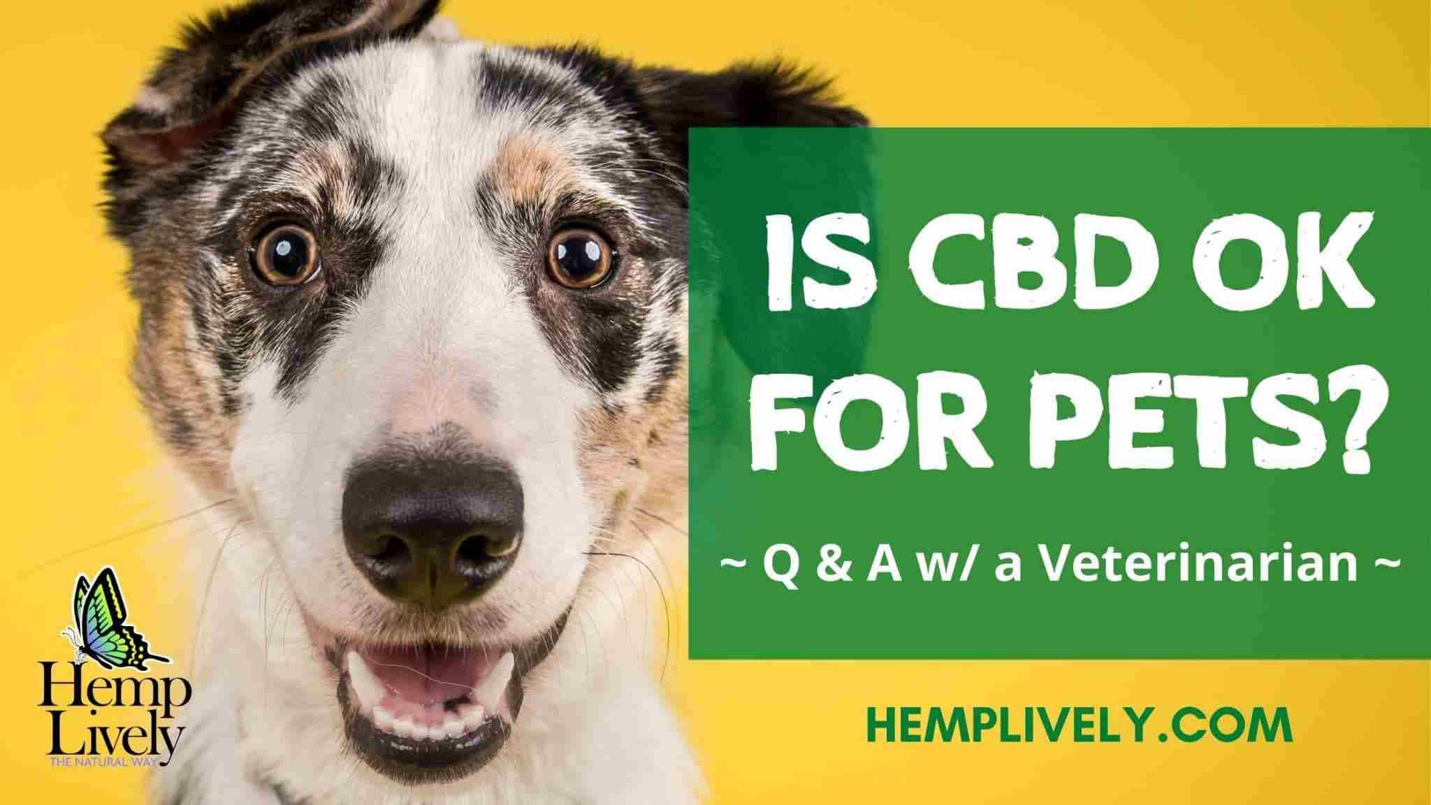 Q & A with a Veterinarian: Is CBD Okay for Pets?