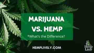 Marijuana vs Hemp Blog Banner