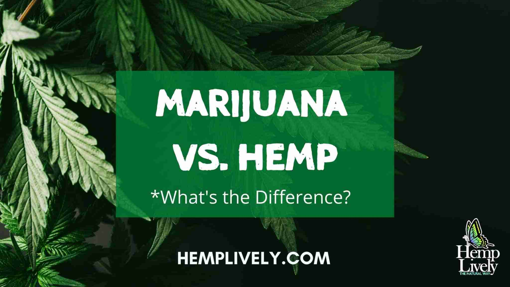 What's the Difference Between Marijuana and Hemp?