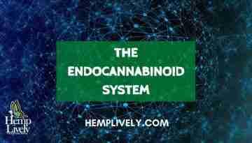 THE ENDOCANNABINOID SYSTEM Blog Banner