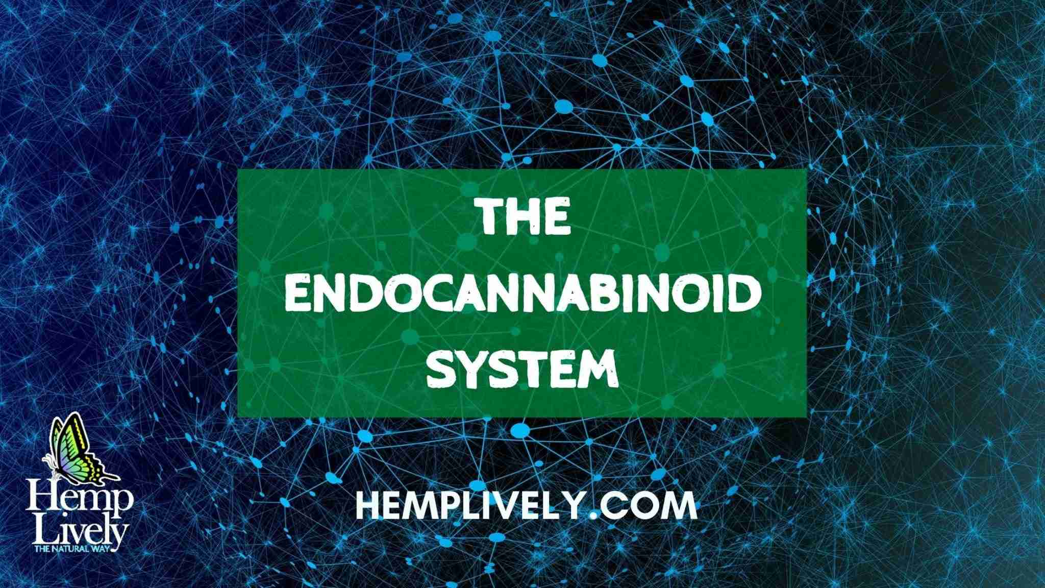 The Endocannabinoid System: Our Body's Link to Hemp