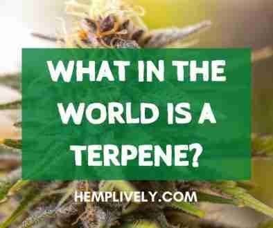 what in the world is a terpene?