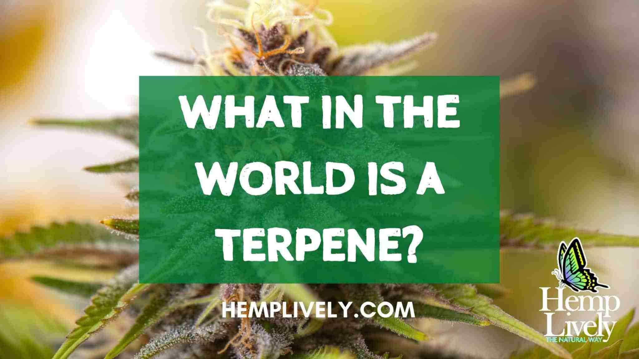 What in the World of Cannabis is a Terpene?